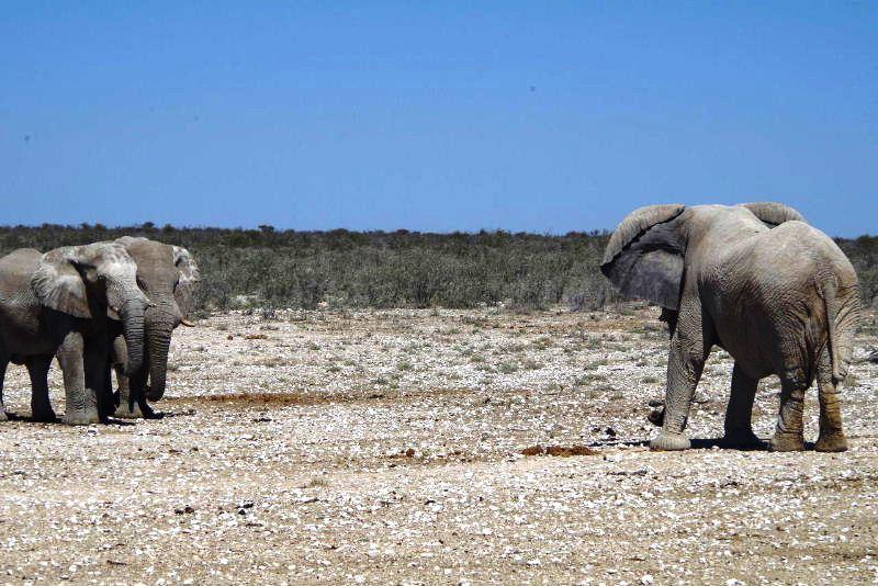 ナミビアの旅(38) エトーシャ国立公園のサファリドライブ(2)_c0011649_8323281.jpg