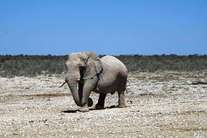 ナミビアの旅(38) エトーシャ国立公園のサファリドライブ(2)_c0011649_8335281.jpg