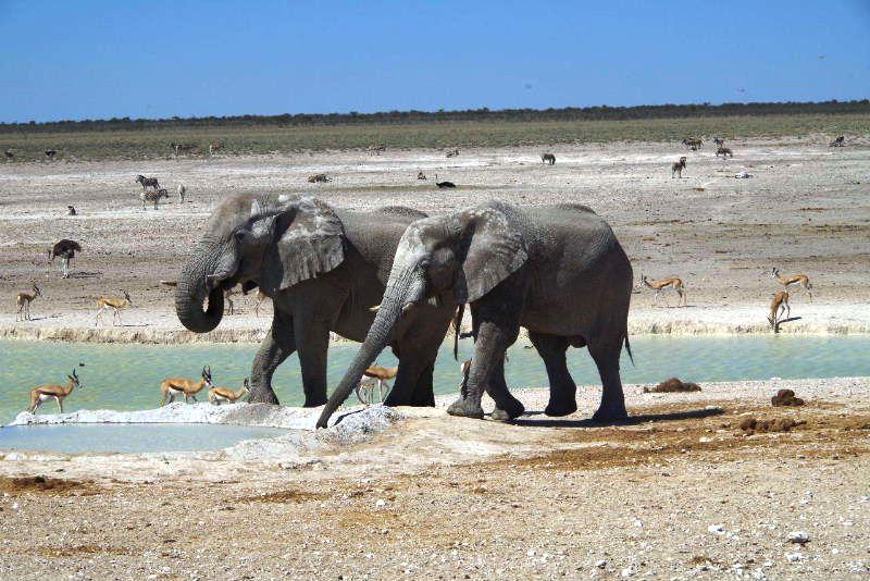 ナミビアの旅(38) エトーシャ国立公園のサファリドライブ(2)_c0011649_8364160.jpg