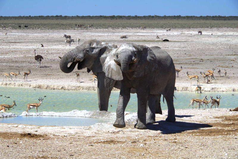 ナミビアの旅(38) エトーシャ国立公園のサファリドライブ(2)_c0011649_837726.jpg