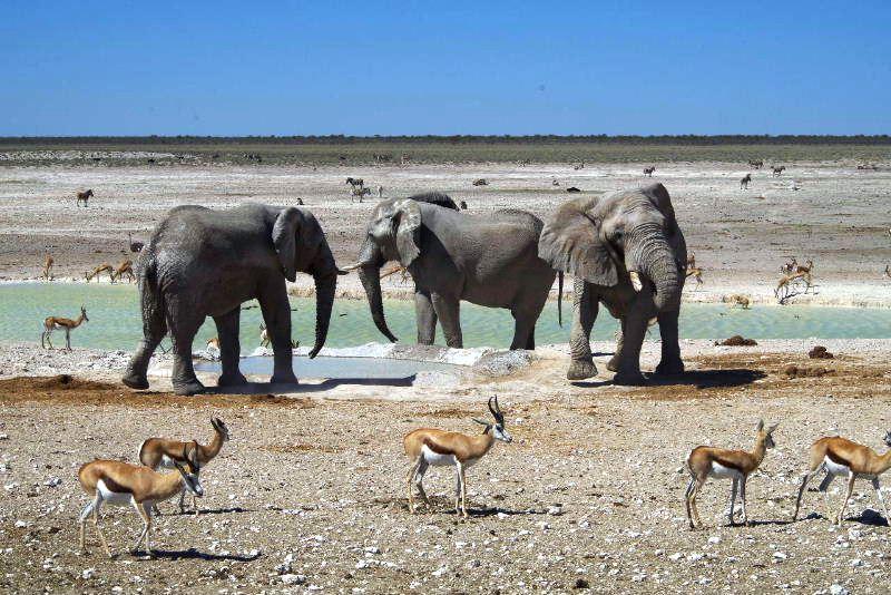 ナミビアの旅(38) エトーシャ国立公園のサファリドライブ(2)_c0011649_838069.jpg