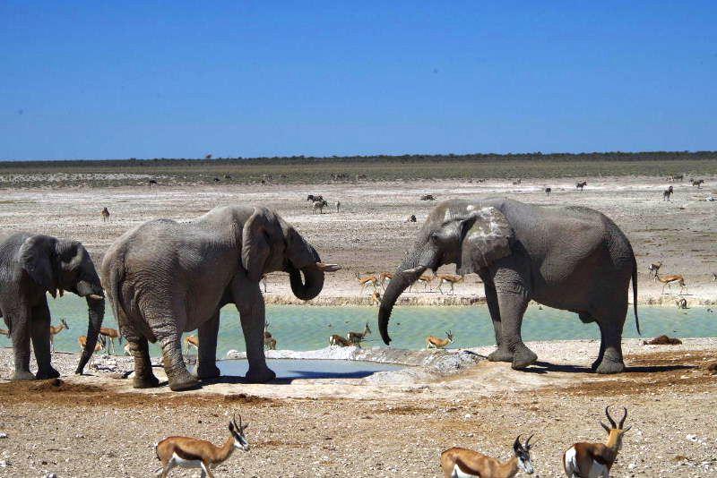 ナミビアの旅(38) エトーシャ国立公園のサファリドライブ(2)_c0011649_8385155.jpg