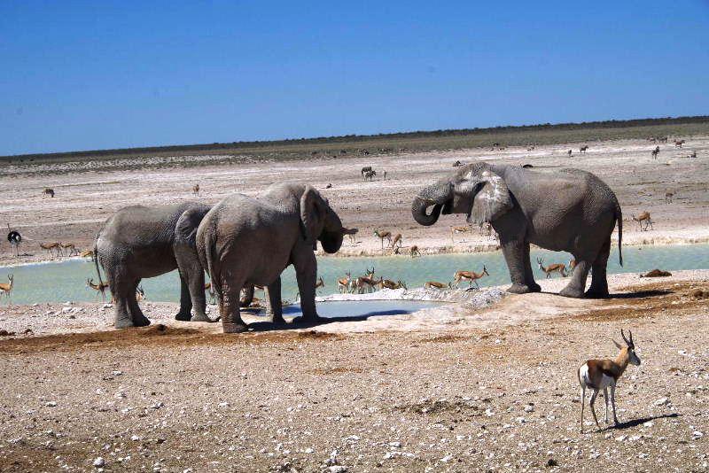 ナミビアの旅(38) エトーシャ国立公園のサファリドライブ(2)_c0011649_8393285.jpg
