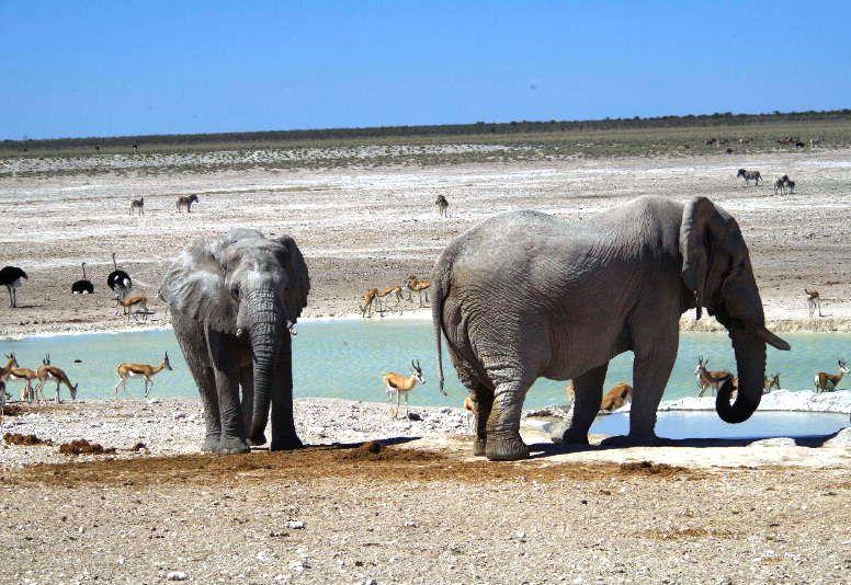ナミビアの旅(38) エトーシャ国立公園のサファリドライブ(2)_c0011649_8453575.jpg