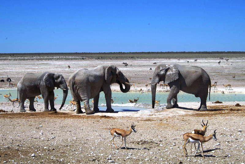 ナミビアの旅(38) エトーシャ国立公園のサファリドライブ(2)_c0011649_846994.jpg