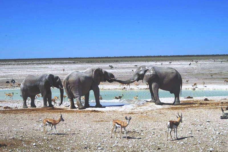 ナミビアの旅(38) エトーシャ国立公園のサファリドライブ(2)_c0011649_8512231.jpg