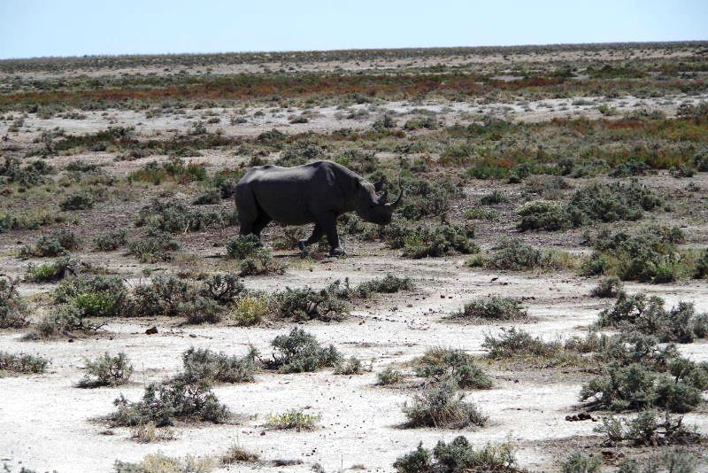 ナミビアの旅(38) エトーシャ国立公園のサファリドライブ(2)_c0011649_8591582.jpg
