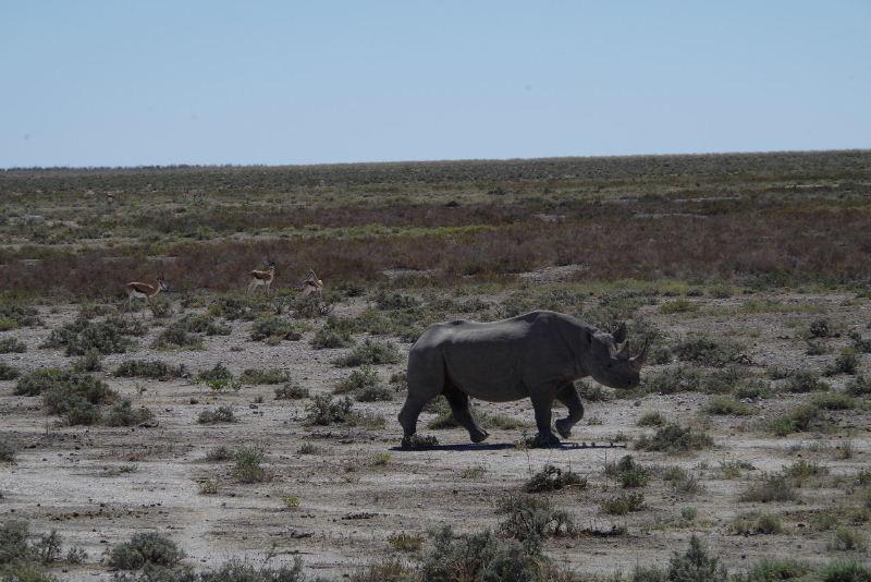 ナミビアの旅(38) エトーシャ国立公園のサファリドライブ(2)_c0011649_8593883.jpg