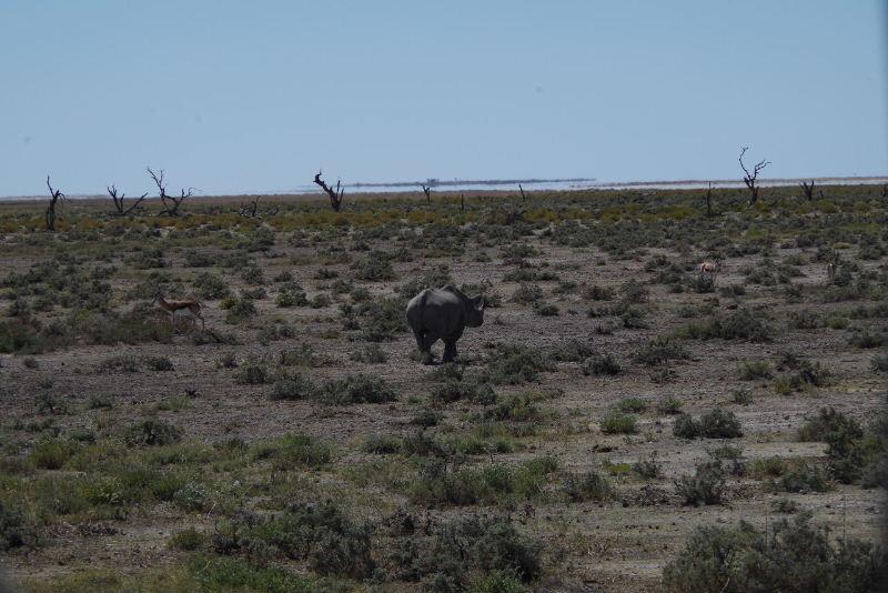 ナミビアの旅(38) エトーシャ国立公園のサファリドライブ(2)_c0011649_902111.jpg
