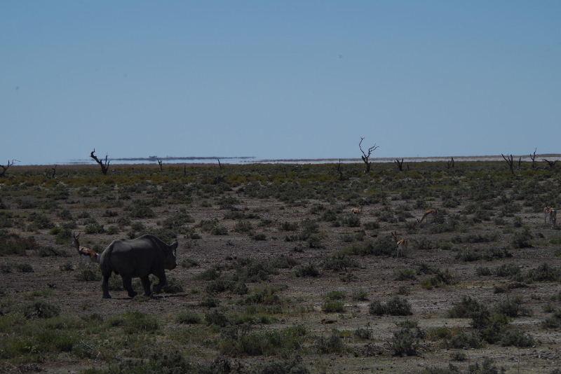ナミビアの旅(38) エトーシャ国立公園のサファリドライブ(2)_c0011649_90631.jpg