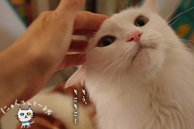 ミミちゃん 十一月二十一日_e0031853_2127483.jpg