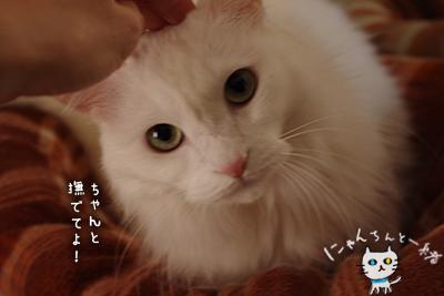 ミミちゃん 十一月二十一日_e0031853_2128159.jpg