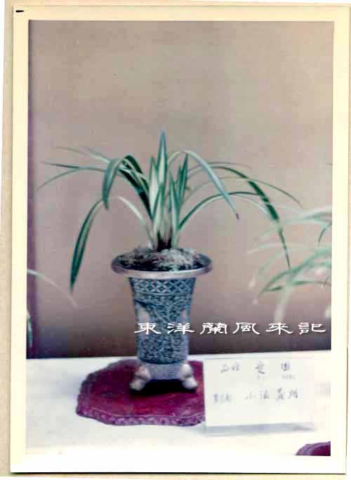 大阪万国博覧会(昭和45年)             No.1347_d0103457_1481571.jpg