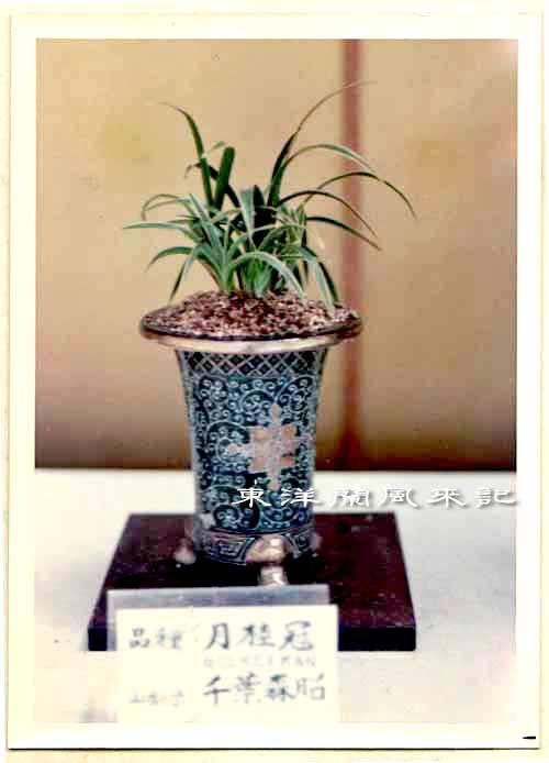 大阪万国博覧会(昭和45年)             No.1347_d0103457_1483479.jpg