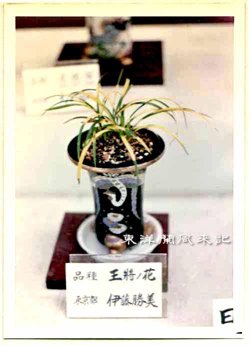 大阪万国博覧会(昭和45年)             No.1347_d0103457_1484235.jpg