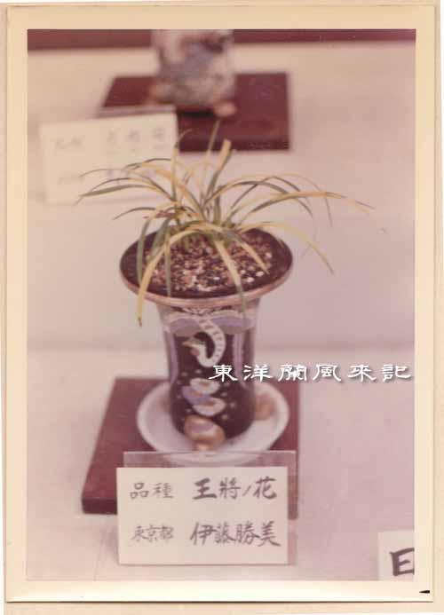 大阪万国博覧会(昭和45年)             No.1347_d0103457_1485021.jpg