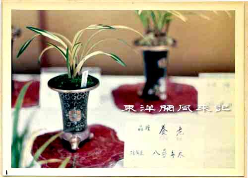 大阪万国博覧会(昭和45年)             No.1347_d0103457_148714.jpg