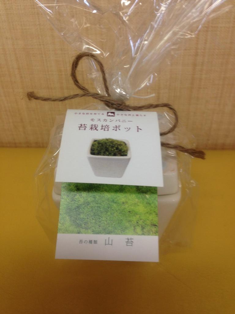 苔の栽培セット_c0234975_1541095.jpg