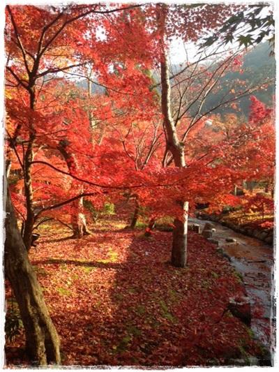 名古屋・京都高島屋さんストウブイベント終了!_b0165178_16194410.jpg