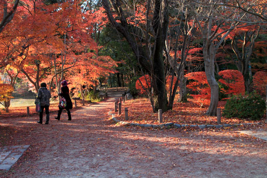 植物園 散りモミジ 13紅葉だより70_e0048413_20215314.jpg