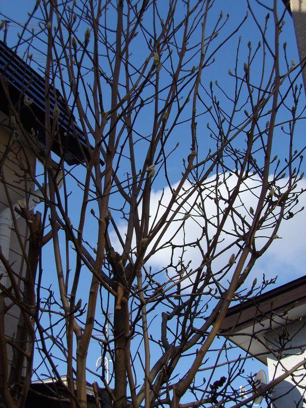 植物たちに優しい冬の始まり方_c0025115_22532901.jpg