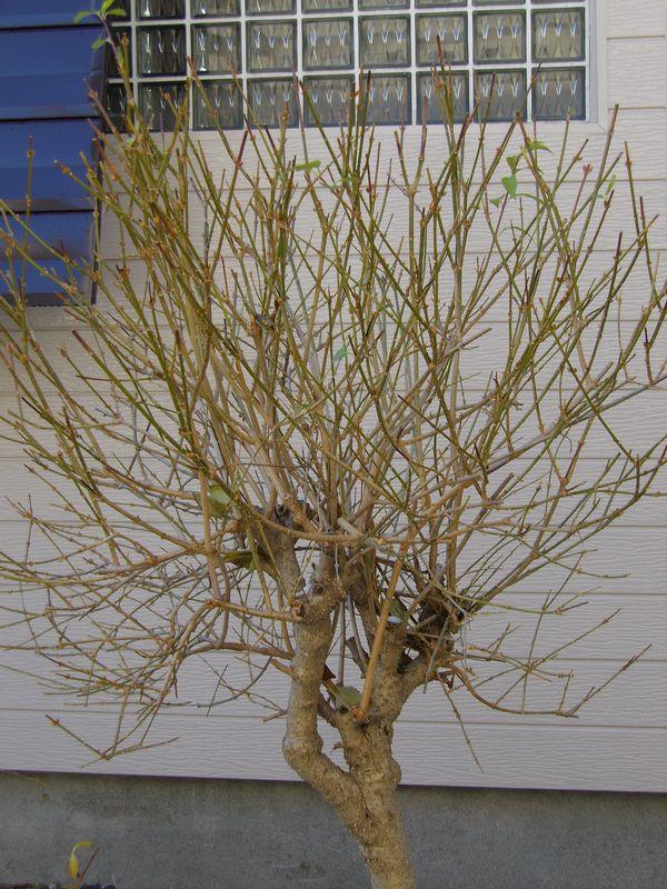 植物たちに優しい冬の始まり方_c0025115_22552799.jpg