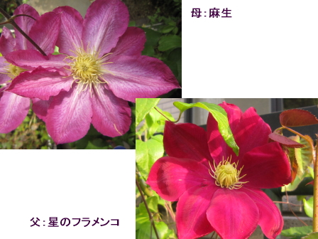 c0025140_22243.jpg