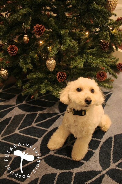 クリスマスツリー_a0244751_15444964.jpg