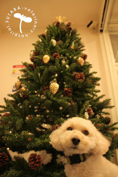 クリスマスツリー_a0244751_15451262.jpg
