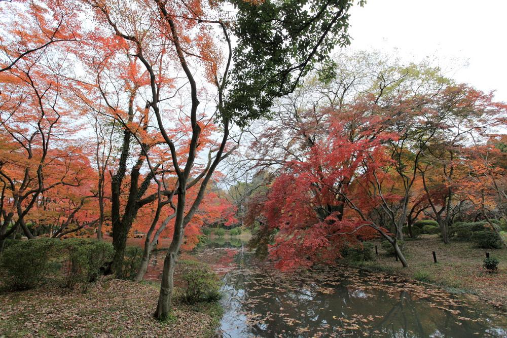 紅葉 2013 <京都府立植物園>          _f0021869_0125517.jpg