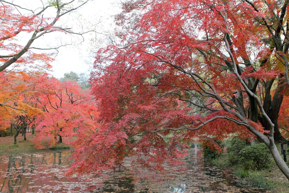 紅葉 2013 <京都府立植物園>          _f0021869_0134497.jpg
