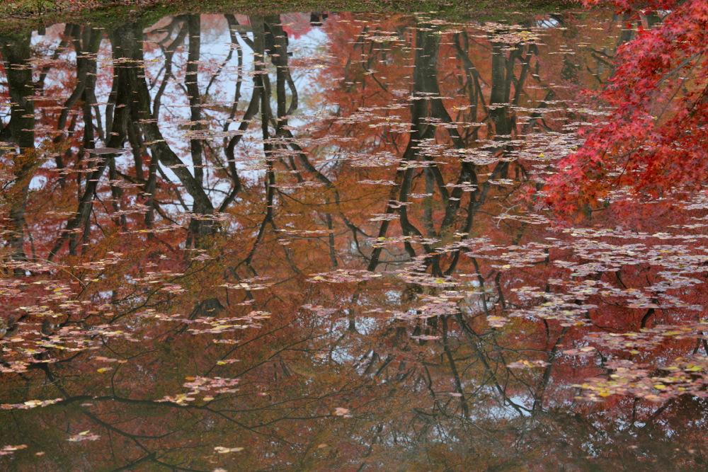 紅葉 2013 <京都府立植物園>          _f0021869_013919.jpg