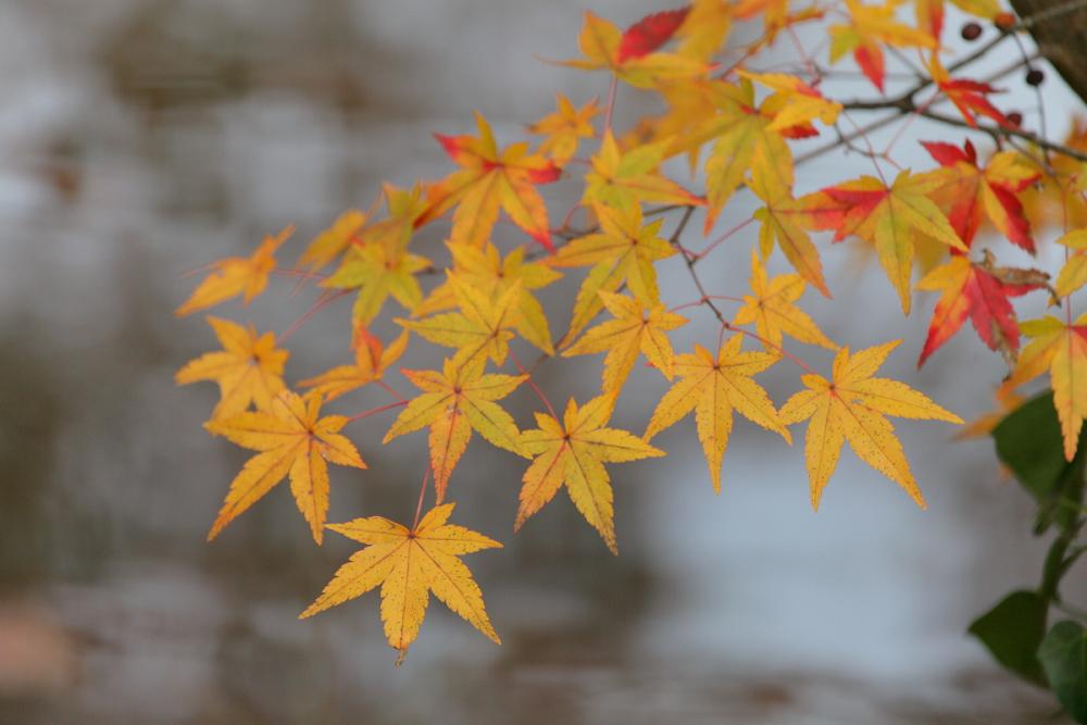 紅葉 2013 <京都府立植物園>          _f0021869_014132.jpg