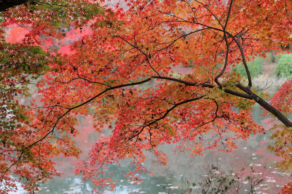 紅葉 2013 <京都府立植物園>          _f0021869_014513.jpg