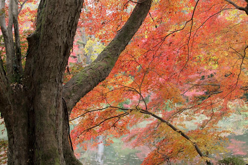 紅葉 2013 <京都府立植物園>          _f0021869_015511.jpg