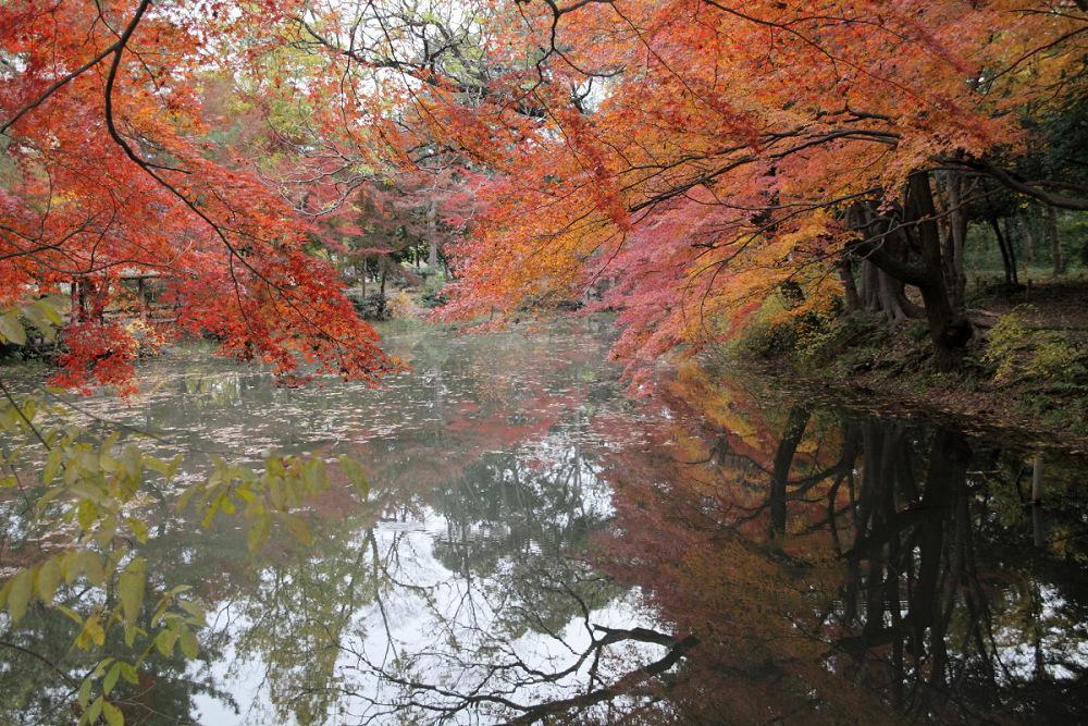 紅葉 2013 <京都府立植物園>          _f0021869_23104330.jpg