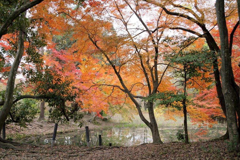 紅葉 2013 <京都府立植物園>          _f0021869_23113825.jpg