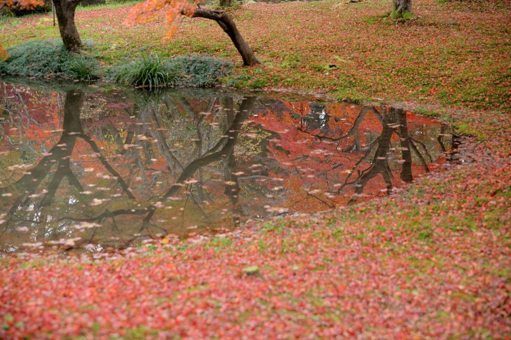 紅葉 2013 <京都府立植物園>          _f0021869_23114734.jpg