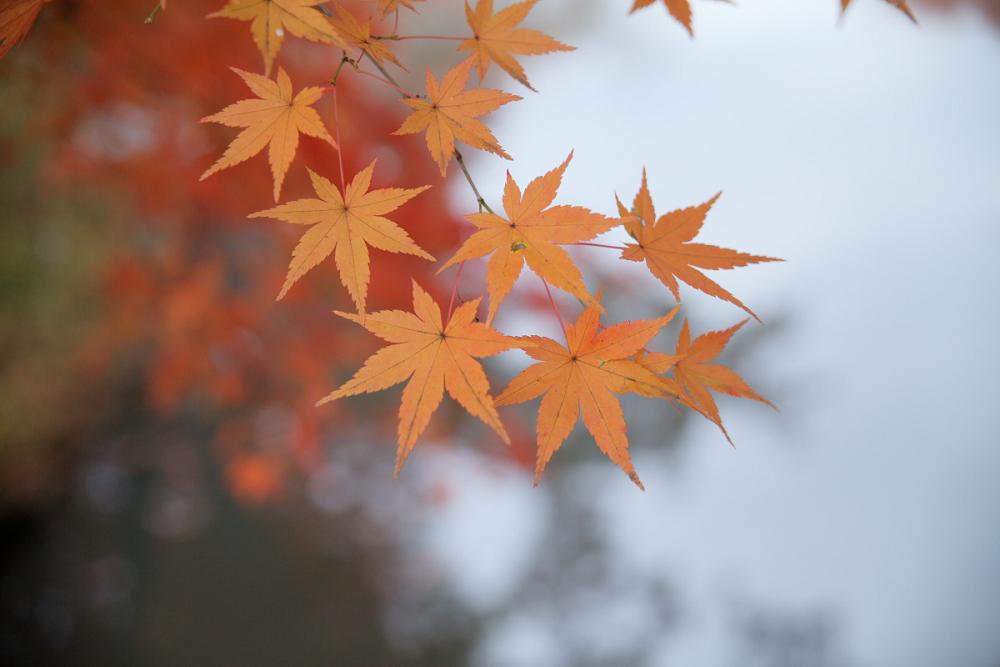 紅葉 2013 <京都府立植物園>          _f0021869_23115263.jpg