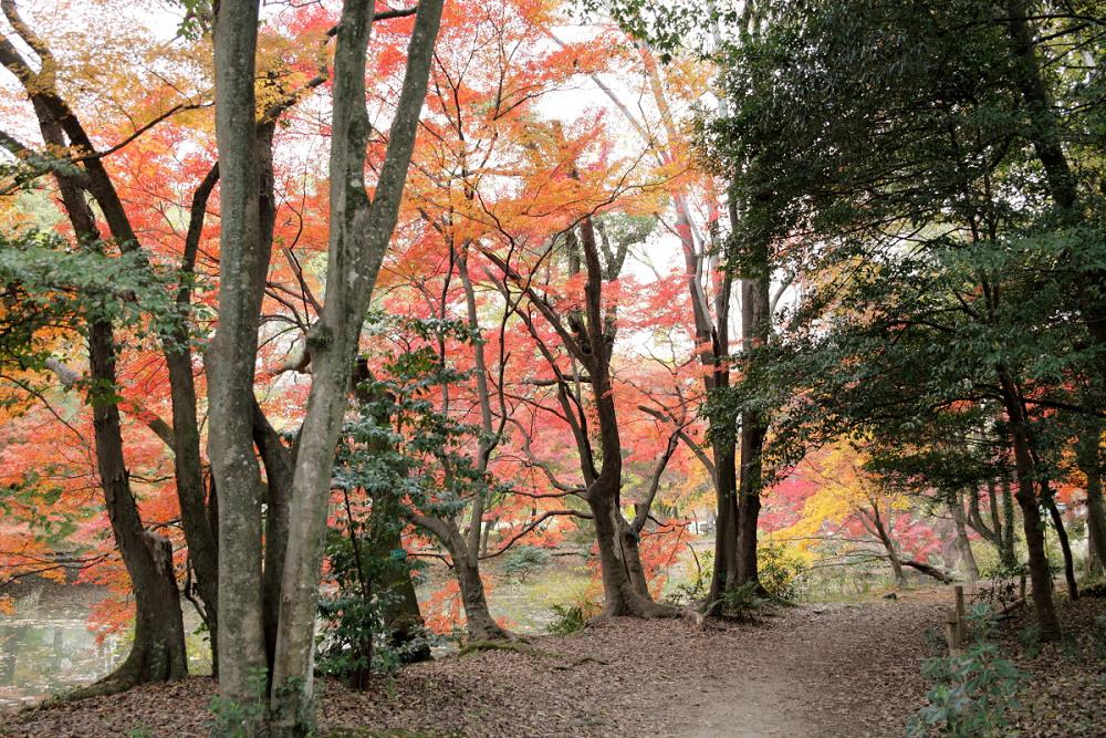 紅葉 2013 <京都府立植物園>          _f0021869_23121621.jpg
