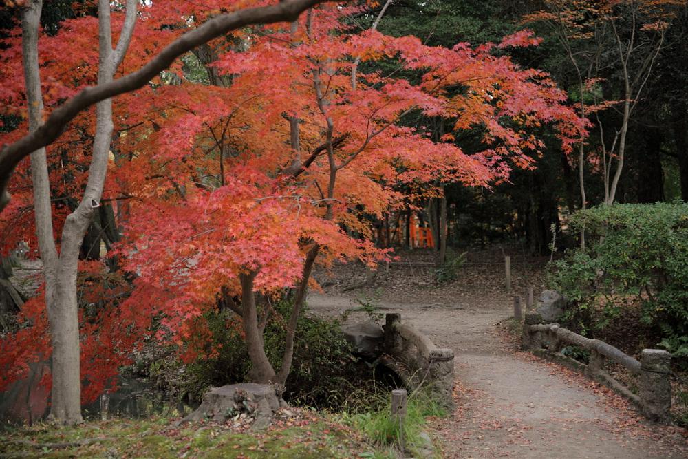 紅葉 2013 <京都府立植物園>          _f0021869_231254.jpg