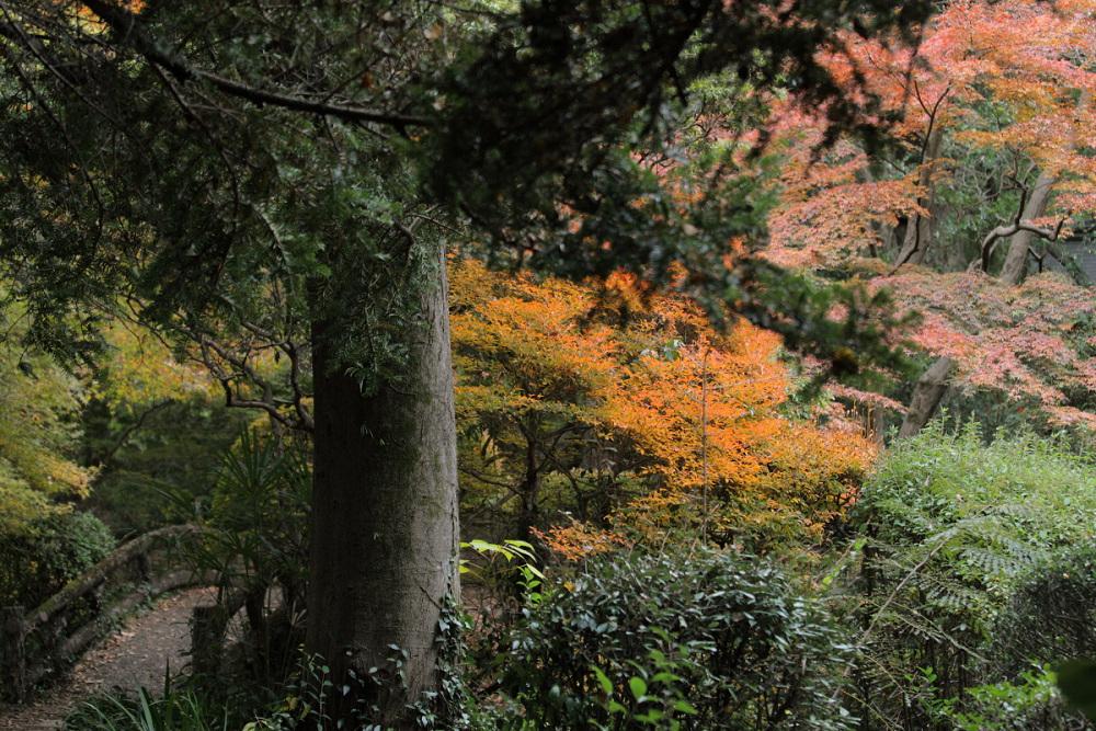 紅葉 2013 <京都府立植物園>          _f0021869_2385334.jpg