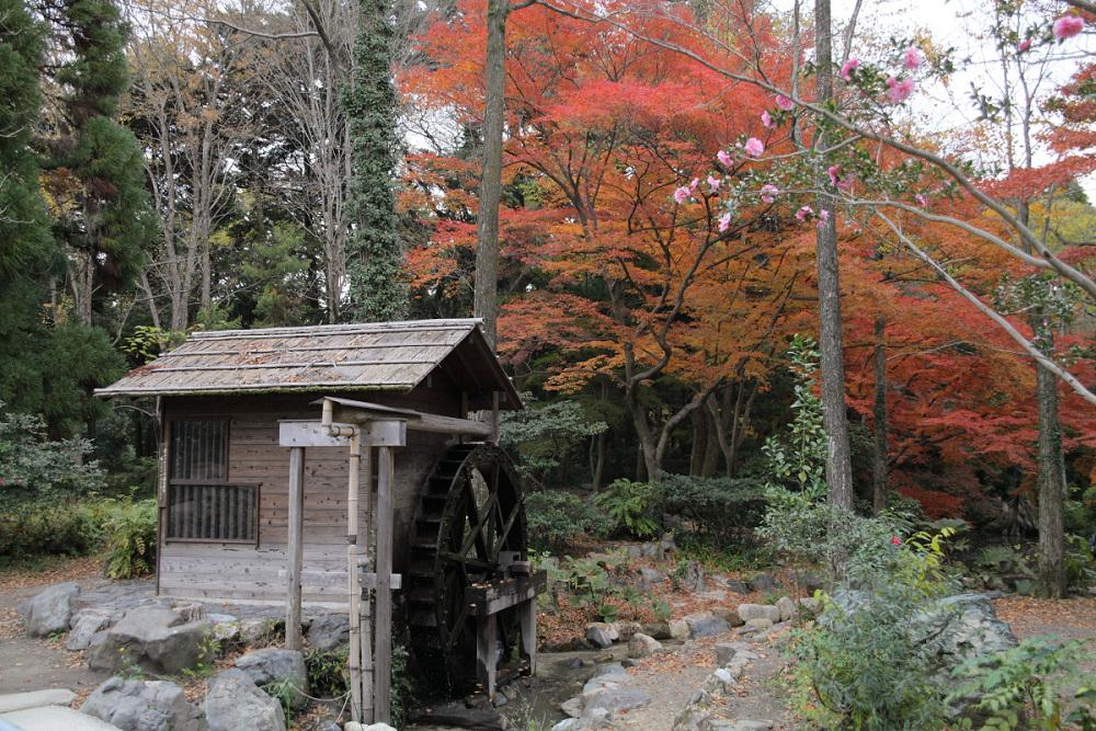 紅葉 2013 <京都府立植物園>          _f0021869_2391116.jpg