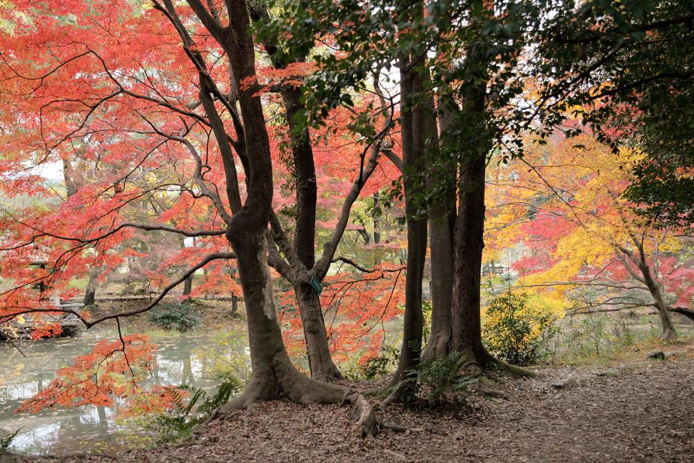 紅葉 2013 <京都府立植物園>          _f0021869_2392170.jpg