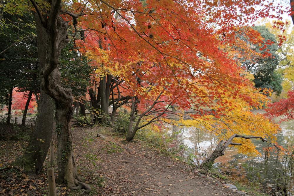 紅葉 2013 <京都府立植物園>          _f0021869_2394213.jpg