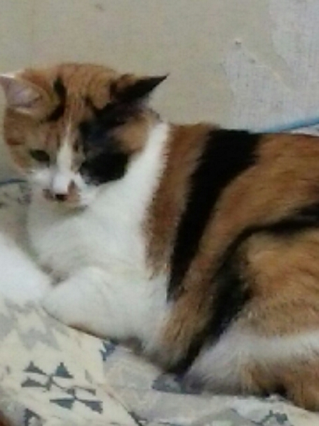 猫たち_b0112380_2053433.jpg