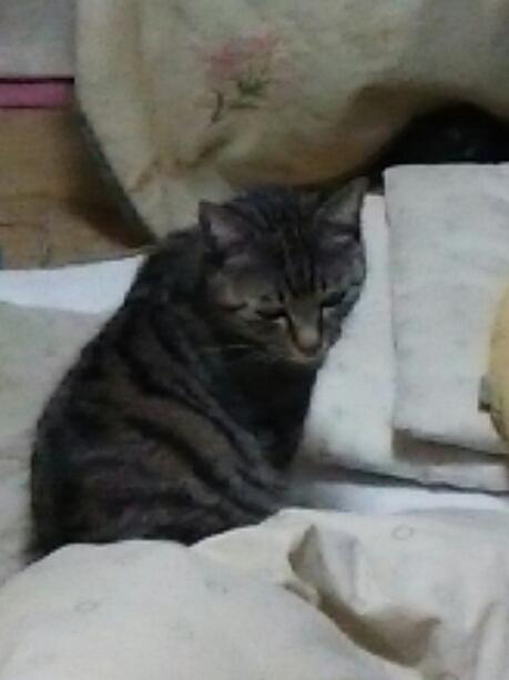 猫たち_b0112380_2053514.jpg