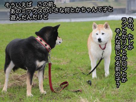 c0166018_011465.jpg