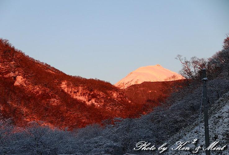 北海道探鳥ツアー part4  大空を舞う 「オオワシ」 さん♪ by ミント編_e0218518_20225463.jpg