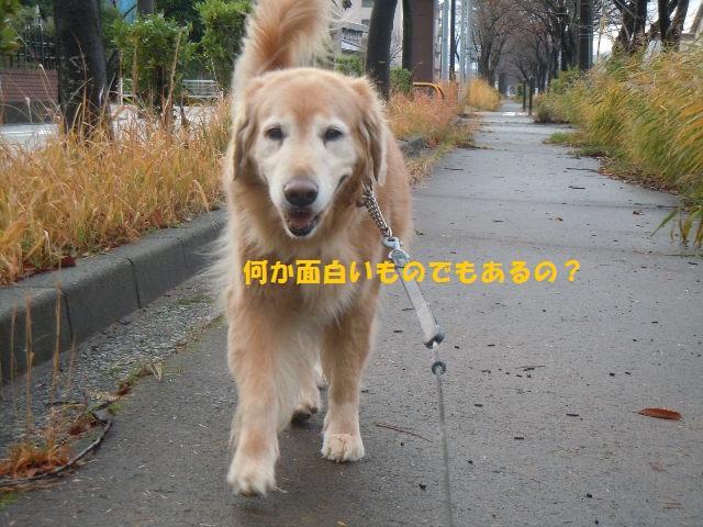 f0114128_1734314.jpg